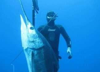 Francisco Loffredi huge marlin